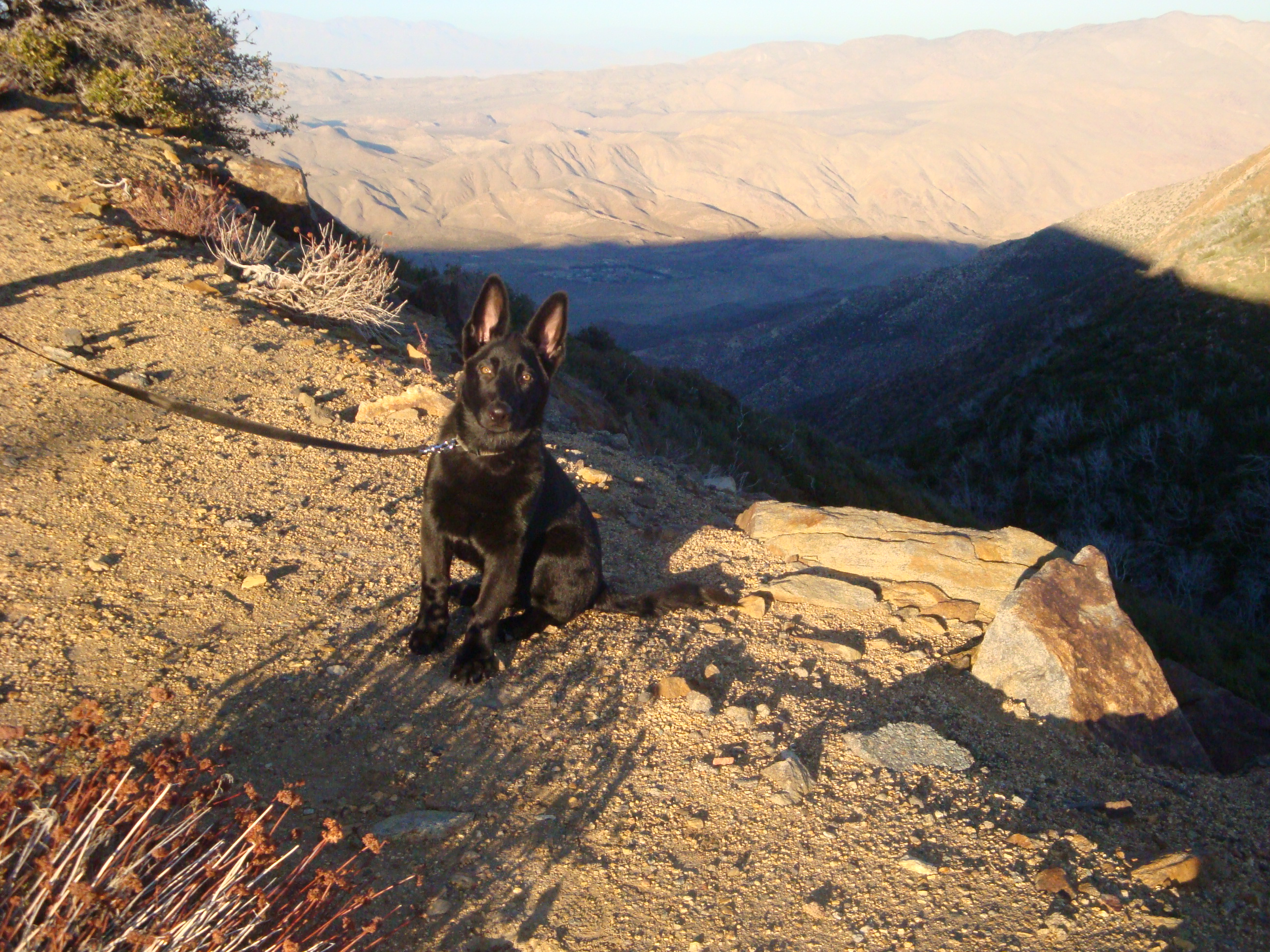 Moses -4 GSD