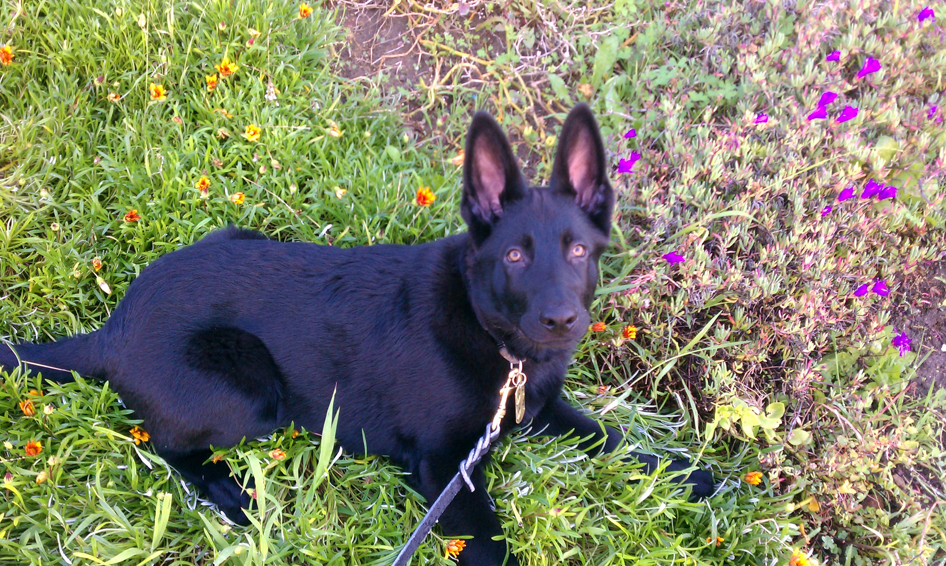 Moses -5 GSD
